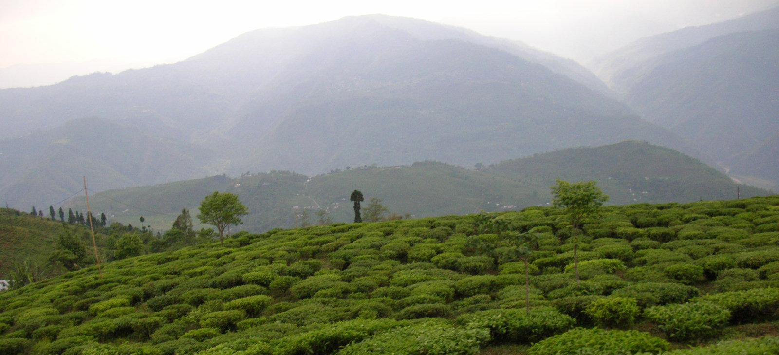 Darjeeling panorama